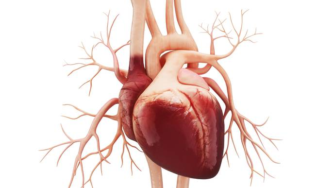 Research Findings Open the Way for More Heart Donations
