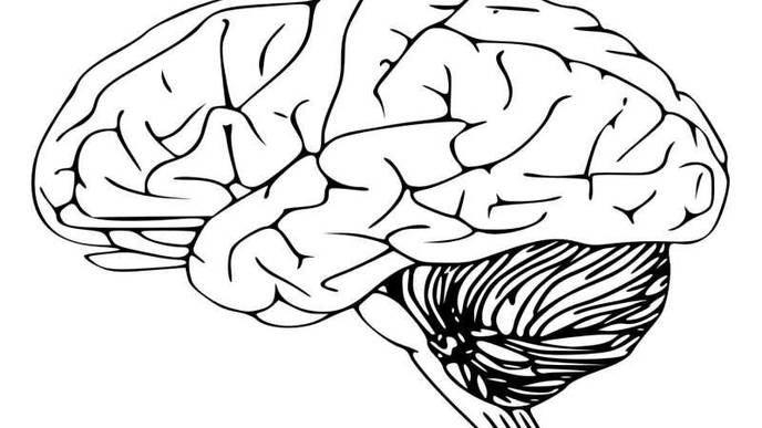 Mnemonic Device Used to Improve Short-Term Memory Found to Also Improve Longer-Term Memory