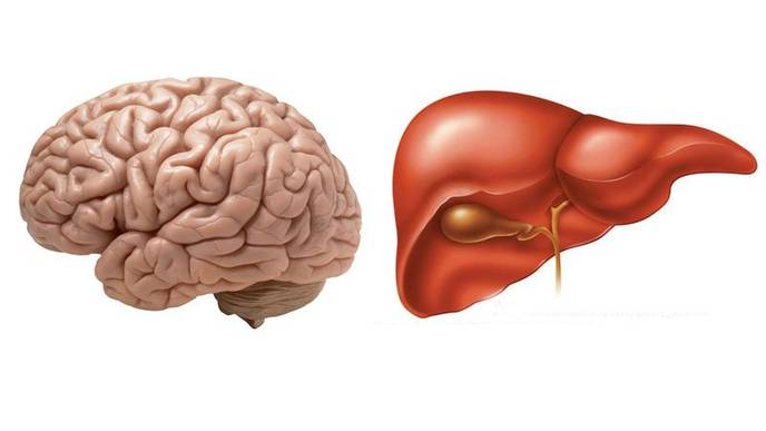 Fatty Liver Linked to a Shrinking Brain