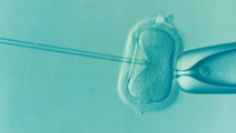 Study: How In Vitro Fertilization Affects Embryonic Growth
