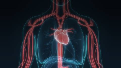 An Intraosseous Inspection: Using IO Devices for Vascular Access