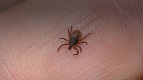 Emerging Tickborne Diseases