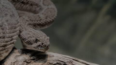 Navigating the Snake Bite Treatment Algorithm
