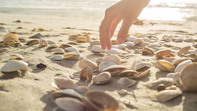 Sea Snail Compound Reduces Cancer Risk