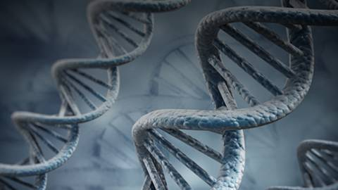 The Genetics of Methuselah