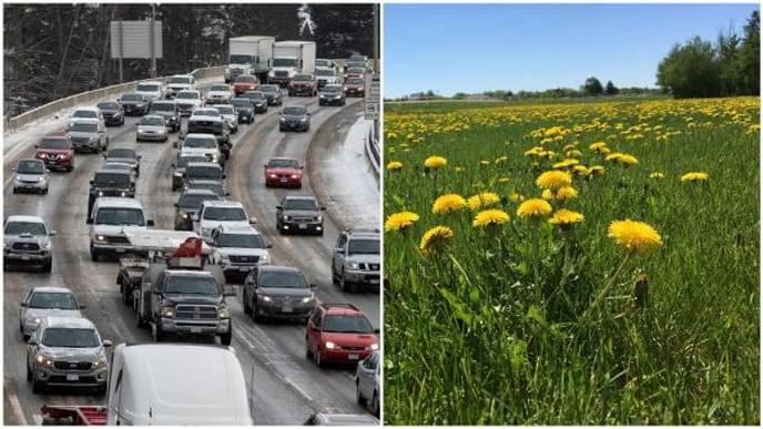 Living Near Traffic Corridors Linked to Risk of MS, Parkinson's, Alzheimer's Disease