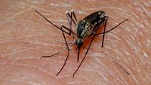 Study Offers New Hope for Elimination of Malaria