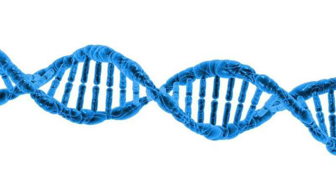 What's the Relationship Between Length of Pregnancy & DNA Changes?