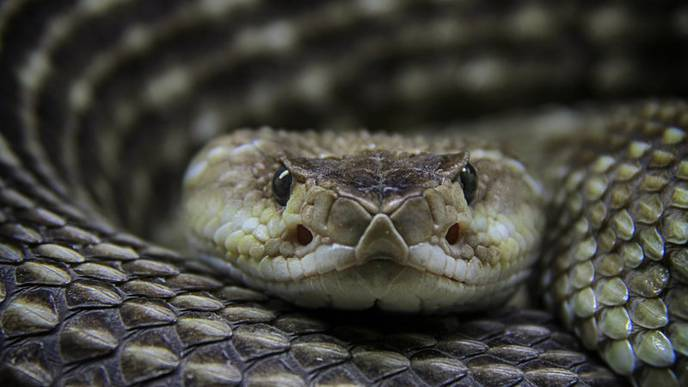 Why Competition Hasn't Brought Down the High Price of Snakebite Treatment