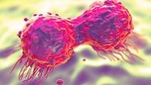 Study: Immune Evasion Mechanisms in Breast Cancer