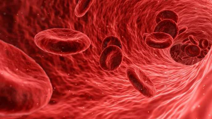 How High Lipid Levels Cause Inflammation & Damage Kidneys & Blood Vessels