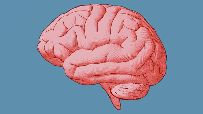 Conscious Visual Perception Occurs Outside the Visual System