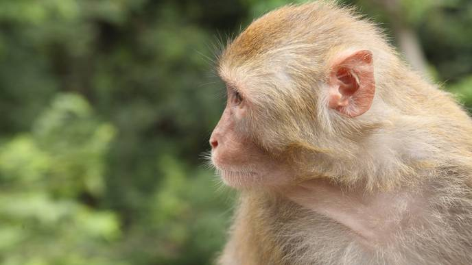 Discovery in Monkeys Could Lead to Treatment for Blindness-Causing Syndrome