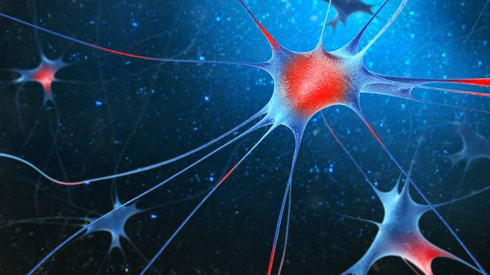 Personalized Approach to Parkinson's Treatment