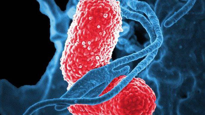 Study on the Effect of Rosemary & Ginger Essential Oils Against Klebsiella Pneumoniae