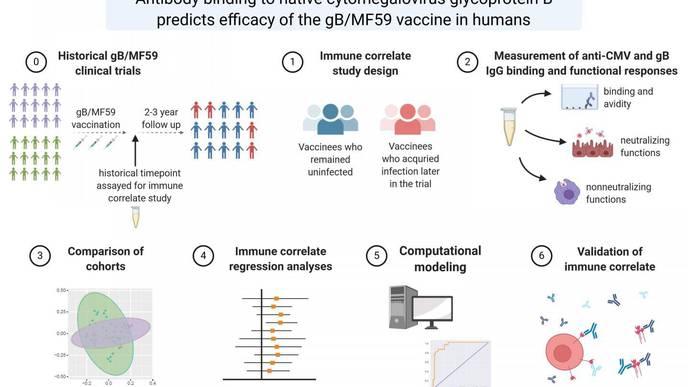 Researchers Identify Key Marker to Help Speed Development of CMV Vaccines