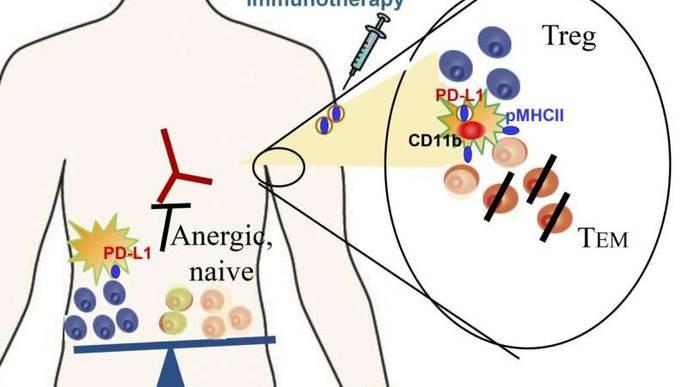 'Tiny Fat Bubbles' Can Boost Immunity & Calm Disease