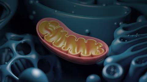 Nutrition Interventions to Support Mitochondrial Health During Aging