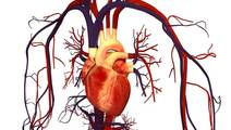 Stress Cardiac MRI Can Diagnose Fatal Cases of Coronary Artery Disease