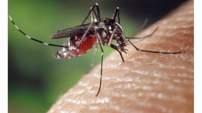 Model That Compares Needles to Mosquitoes Offers Insights into Hep C Solutions