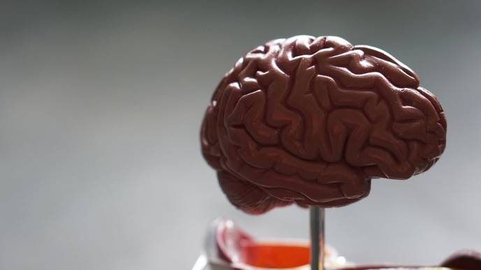 Study Links Brain Energy Deficits to Migraine Susceptibility