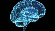 Does Our Environment Affect the Genes in our Brains?