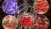 More Than 100 New Gut Bacteria Discovered in Human Microbiome