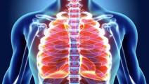 Researchers Make Important Breakthrough in Pulmonary Fibrosis
