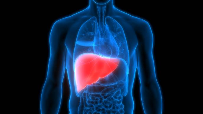 Researchers ID Potential Therapy for Liver Disease in People Living with HIV