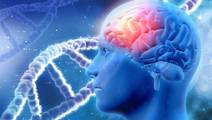 Study: Cannabis Use & Psychotic-Like Experiences Largely Due to Genetic Factors