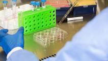 Human Heart Tissue Grown from Stem Cells Improves Drug Testing