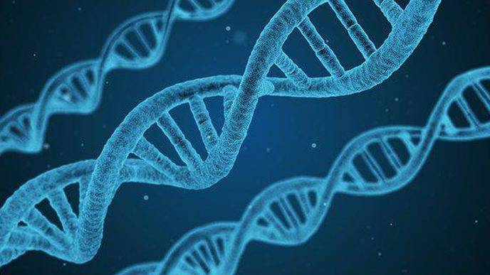 Chromosome 8 Assembly Reveals Novel Genes, Disease Risks