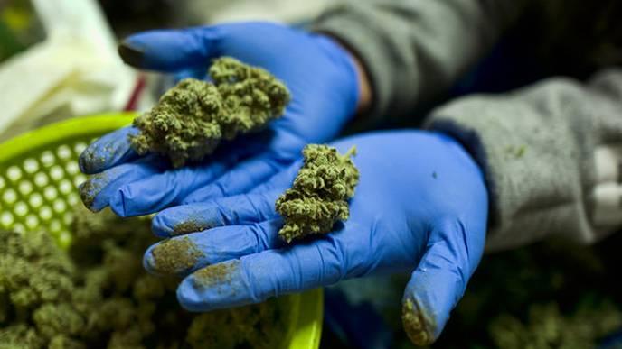 Surgeon General's Advisory on Marijuana's Effects on the Developing Brain