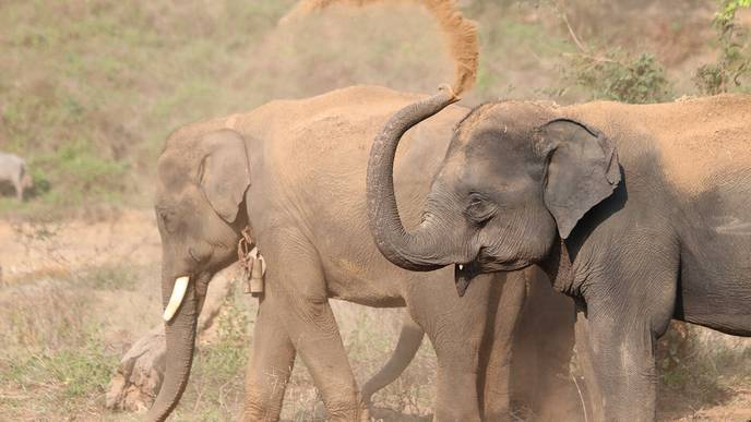 Elephant Genes Suppress Tumors. Could Studying This Help Us Prevent Cancer?