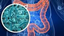 Gut Microbes May Affect Heart Disease Risk, First Study in Humans