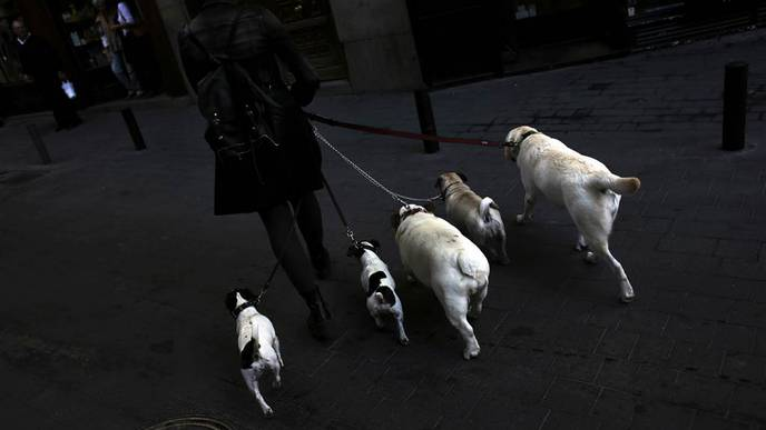 Owning a Dog Linked to Lower Risk of Death After a Heart Attack, Study Finds