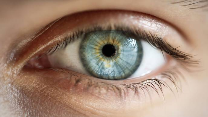 An Advance in Developing Gene Therapy for X-Linked Retinitis Pigmentosa