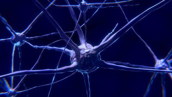 Researchers Find Mechanism Underlying Plasticity in Adult Brains