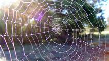 Is Spider Silk the Robotic Muscle of the Future?