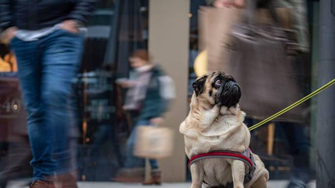 CDC Recommends Social Distancing for Pets