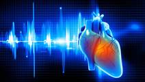 Researchers Discover New Genes Associated With Heart Function