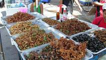 Study: Eating Crickets Can Be Good For Your Gut