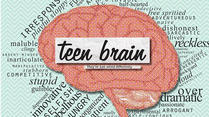 The Purpose Of Teenage Brain >> The Impulsive Teen Brain Isn T Based In Science Be Part Of The