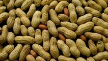 New institute tackles the mysteries of food allergies