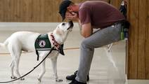 Study: Physiological Benefits of Service Dogs for Veterans with PTSD