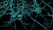 Researchers Find Molecular Key for Delaying Progression of Multiple Sclerosis