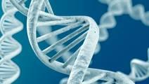 Diabetes and Heart Disease Linked by Genes