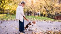 Seniors Increasingly Breaking Bones While Walking Dogs