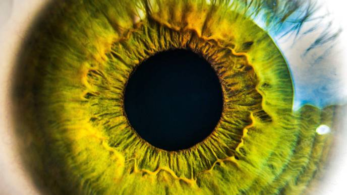 Roughness of Retinal Layers, a New Alzheimer's Biomarker