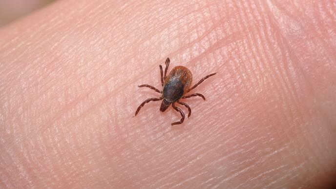 Tick Control Across US Lagging Amid Rising Lyme Disease Threat